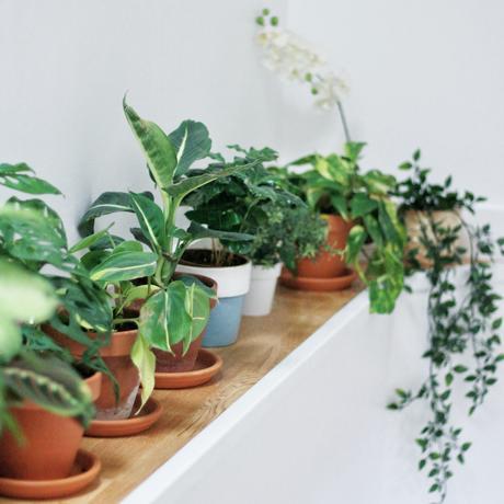 pots plantes vertes plantes grimpantes blog déco
