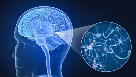 Mais « comment marche » le système glymphatique d'élimination des déchets dans le cerveau ? (Visuel AdobeStock_206037348)