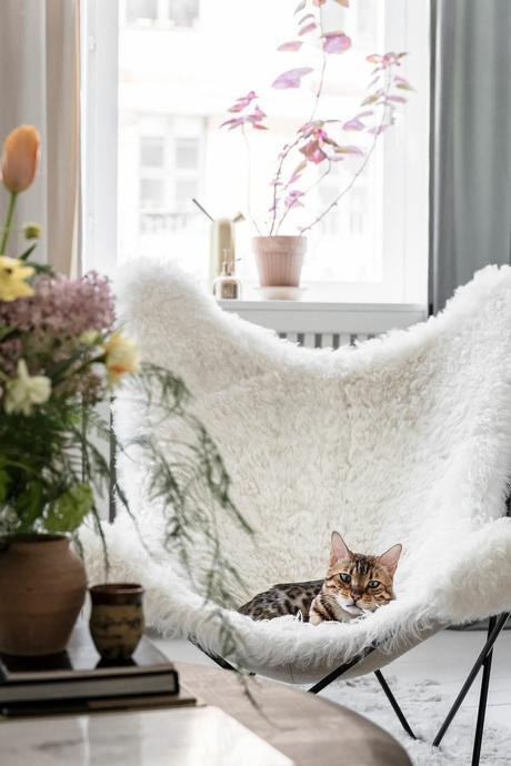 fauteuil papillon fourrure salon blanc chat décoration style modernisme