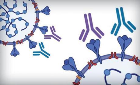 La technique « ELISA » permet de détecter, avec une précision de 80% ou plus des niveaux d'anticorps égaux ou supérieurs aux niveaux recommandés par la FDA pour la thérapie de plasma de convalescence (Visuel University of Texas at Austin)