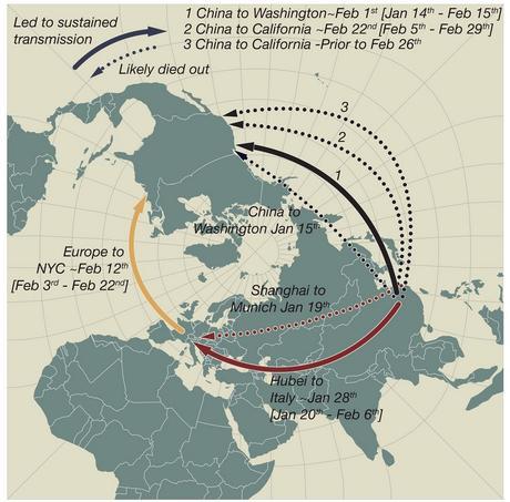 L'absence de régulation des voyages au début de l'épidémie a ouvert une brèche qui a permis au virus de déclencher des flambées majeures en Europe et en Amérique du Nord (.Visuel Andrew Rambaut / Université d'Édimbourg et Jeffrey Joy / Université de la Colombie-Britannique)