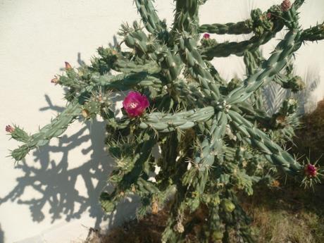 chat,plantes,jardin,tournesols,cactus,fleurs,septembre