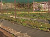 Dépollution sols grâce plantes (vidéo)