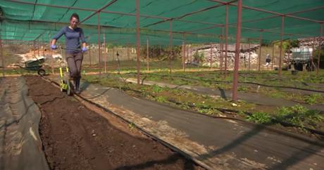 Dépollution des sols grâce aux plantes (vidéo)