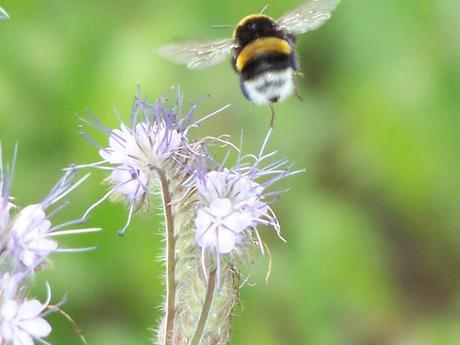 Ensauvager votre jardin pour accueillir la biodiversité