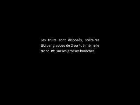 """Fleurs Plantes """"les boulets canon"""""""