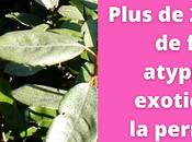 Plus exemples fruitiers atypiques exotiques pour permaculture urbaine (vidéo)