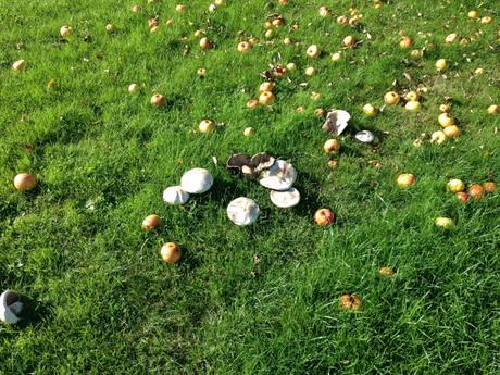 Projet 52: fruits d'automne