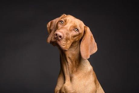 Soins et hygiènes pour votre chien de compagnie préféré