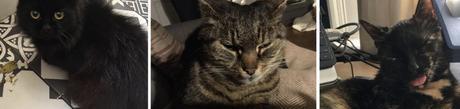 Le syndicat des chats