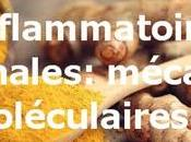 Curcumine maladies inflammatoires intestinales: mécanismes moléculaires protection