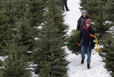 [Noël] Les Sapins de Noël tendances éco-friendly pour la décoration