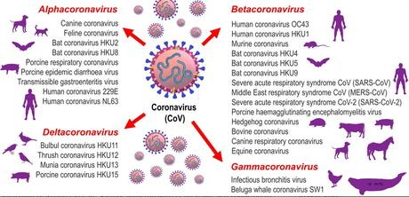 Classification of CoV genera – Alphacoronavirus, Betacoronavirus, Gammacoronavirus and Deltacoronavirus  (Visuel Journal of Small Animal Practice (JSAP) https://doi.org/10.1111/jsap.13207)