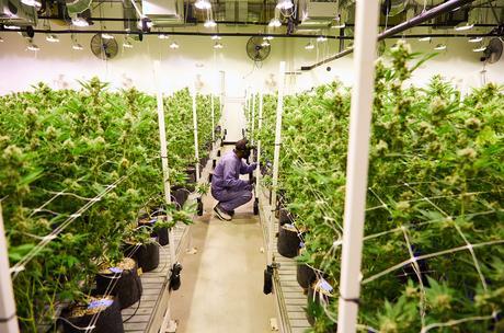 """Jay-Z lance sa première marque de cannabis """"Monogram"""""""