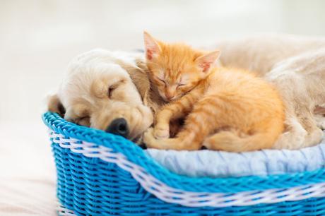 Comment aménager les espaces de vie de votre chat pour optimiser son confort?