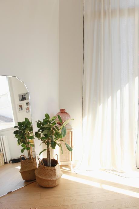 plante bergamotte dans mon salon