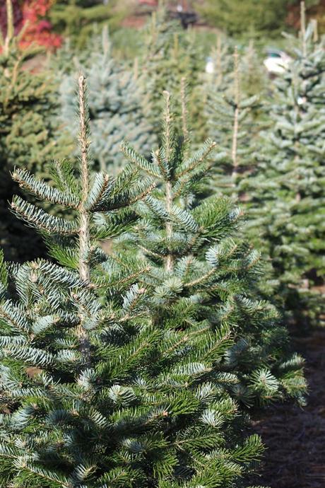 arbre de noël naturel fêtes de fin d année - blog déco - clemaroundthecorner