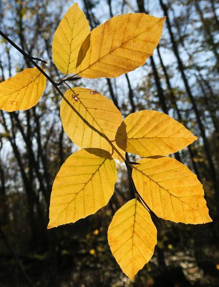 Transparences d'automne