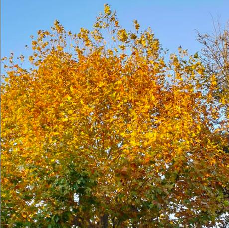 TAG de l'automne 🦊🍂🍁