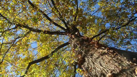 Un arbre pour tenir face à la brutalité du monde