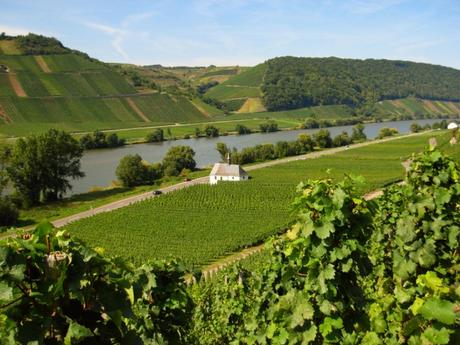 Vignoble de la Moseltal à Neumagen © Moltodor - licence [CC BY-SA 3.0] from Wikimedia Commons