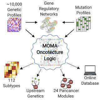 #Cell #paysagetranscriptionnel #régulationmodulaire #cancer Un paysage transcriptionnel de régulation modulaire majeure contrôle l'identité du cancer