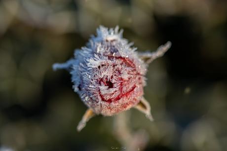 Nature gelée #2