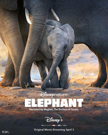 Elephants (2020) de Mark Linfield, Vanessa Berlowitz et Alastair Fotherhill