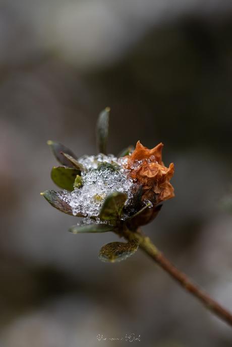 Nature glacée