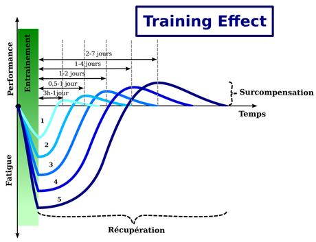 Training effect