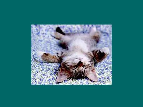 Divers - Résulalt d'un Coup de fatigue