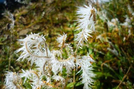 Plantes glacées dans le Jura alsacien © French Moments