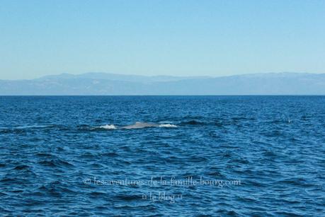 Quelques jours à Santa Barbara + Whale Watching Tour