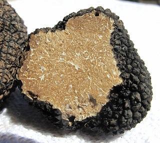 Investir dans un chêne truffier, une bonne affaire?