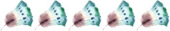 La libellule qui rêvait de toucher les étoiles » Elodie Faiderbe