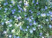 Ciel bleu jardin