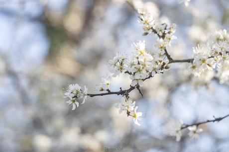 Le printemps est là