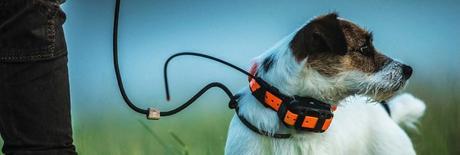 Collier GPS chien