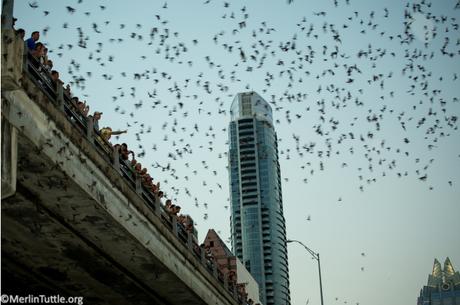 The Batman and the Bridge Builder