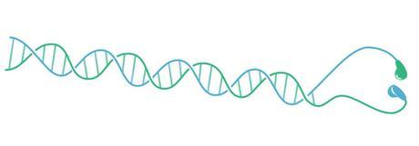 ADN et écouteurs : quel sac de nœuds !