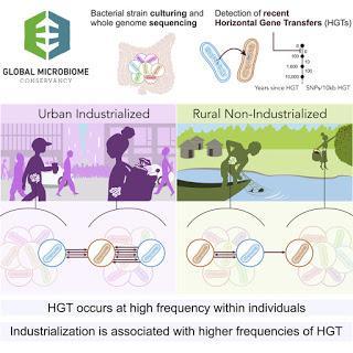#Cell #transferthorizontaldegènes #microbiomehumain #mondeindustrialisé Taux élevés de transfert horizontal de gène dans le microbiome humain du monde industrialisé