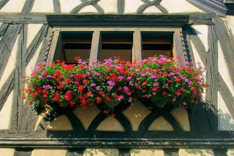 Fenêtre fleurie, mairie de Niedermorschwihr © French Moments