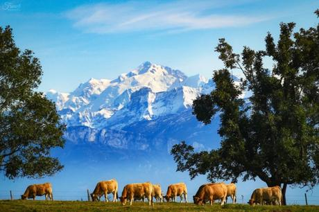 Année 2020 - Mont-Blanc © French Moments