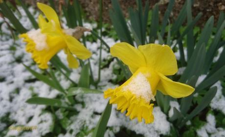 Parfois, il neige en avril…