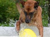 Comment choisir piscine pour chien