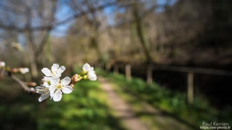 balade florale et boisée à #Gouesnach #Bretagne #Finistère