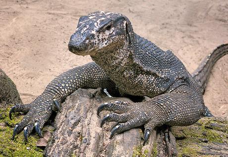 10 avril – à la chasse aux reptiles