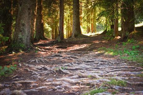 Forêt du Plateau des Glières © French Moments