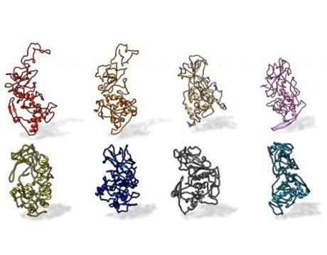 La protéine N (pour Nucleocapside), avec laquelle interagissent les anticorps de patients atteints de COVID-19, est conservée dans tous les coronavirus pandémiques de type SARS (Visuel Kelly Lab / Penn State)