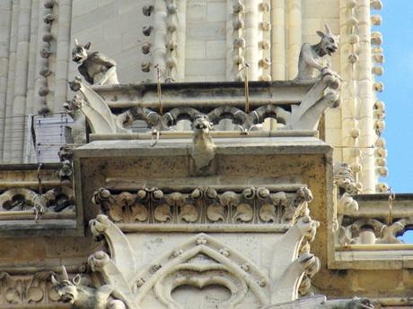 Chimères de Notre-Dame de Paris © French Moments